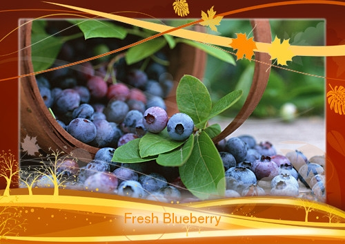 blueberry-2t